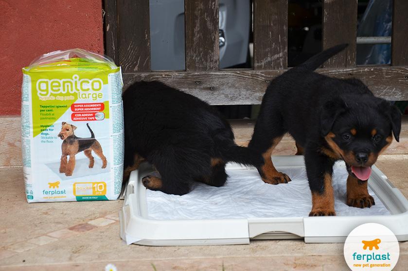 bandeja para tapetes higiênicos para necessidades dos filhotes