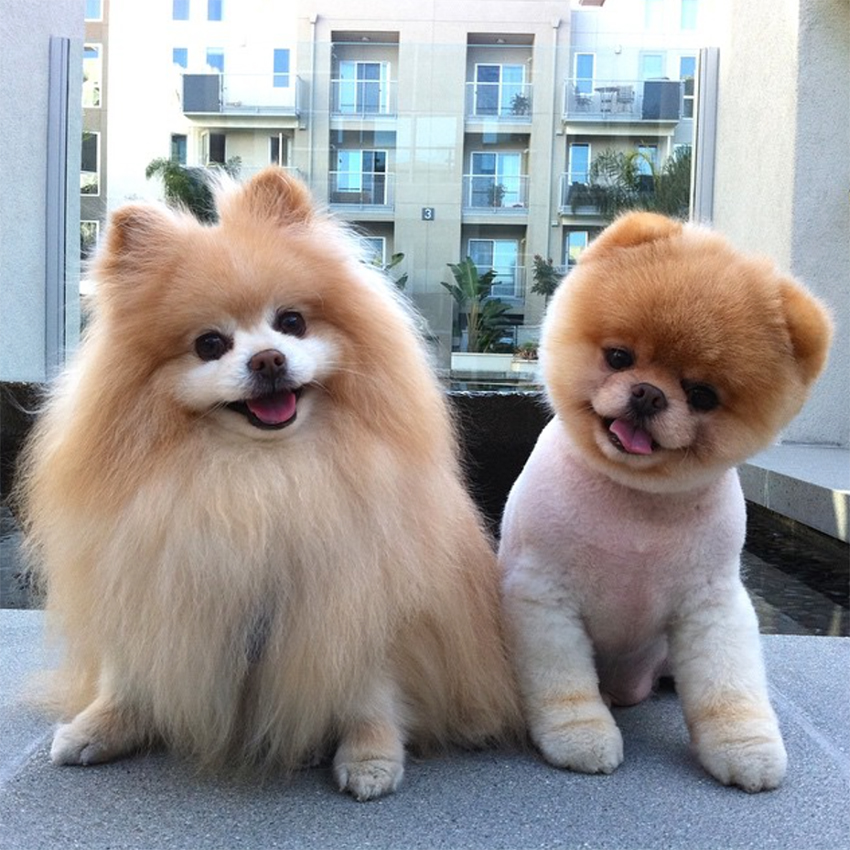 Boo_and_Buddy_dogs