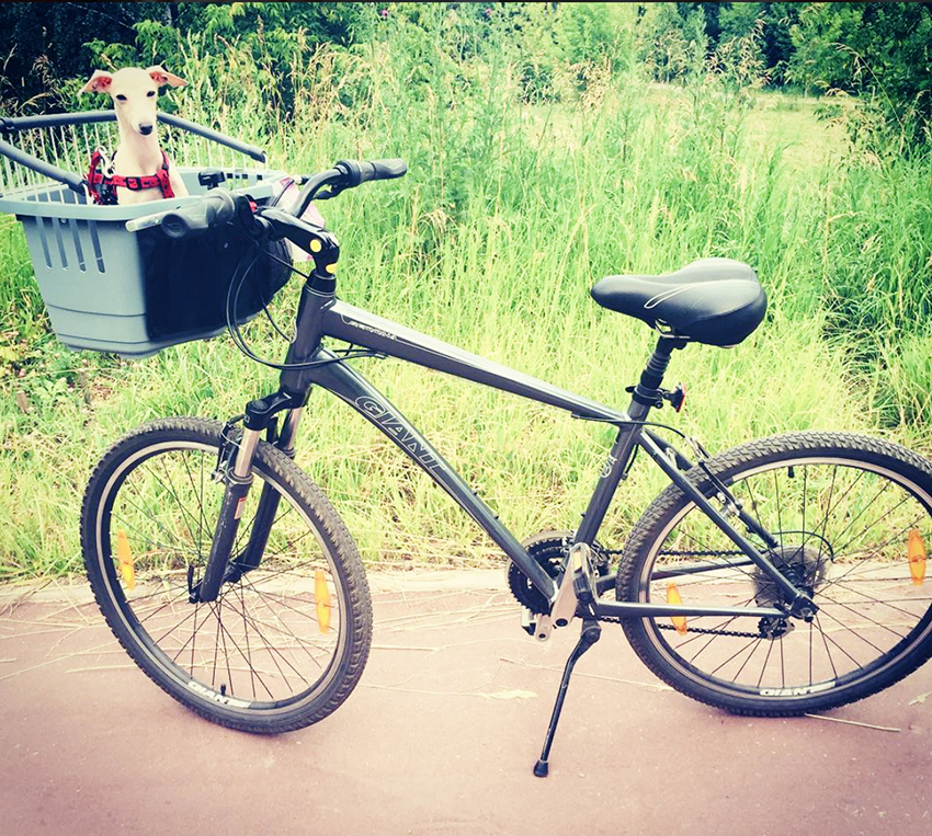 andar de bicicleta com o seu cao