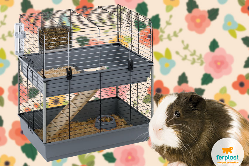 cage for guinea pigs with two floors by ferplast