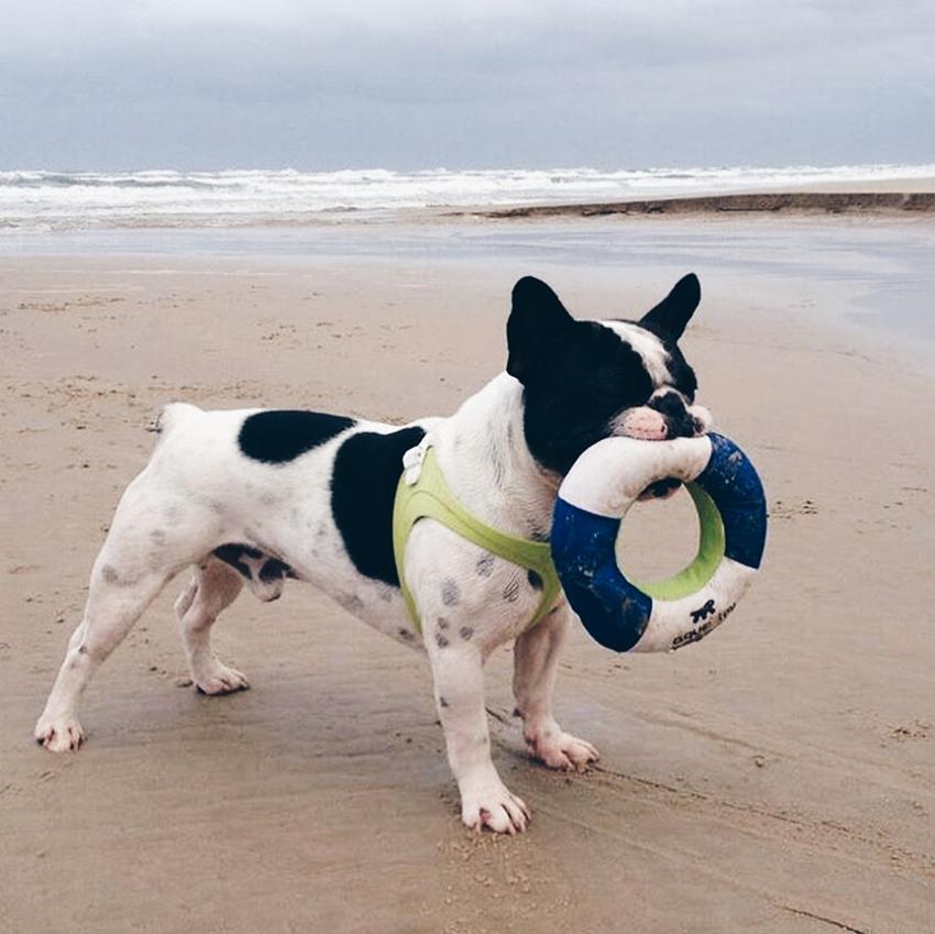 levar o seu cao na praia