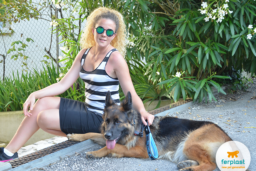 Guias, coleiras e peitorais para cães atletas