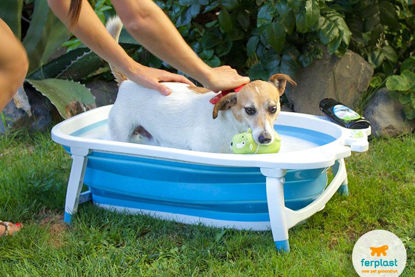 come-lavare-il-cane