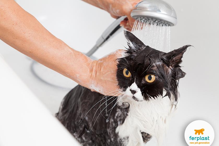 Como dar banho em um gato