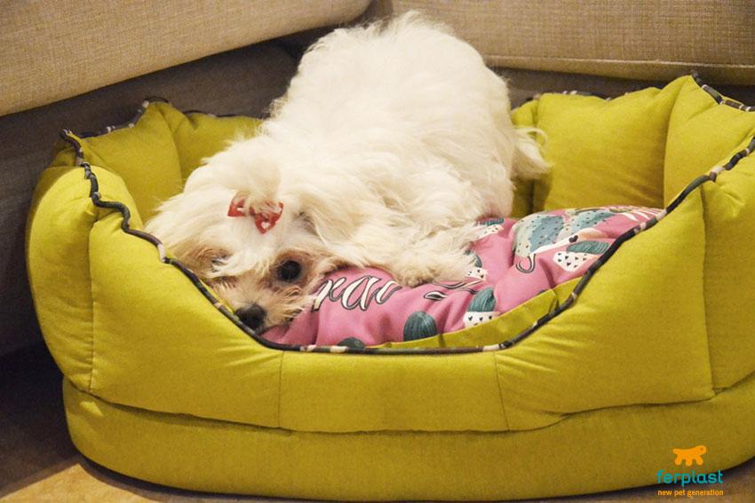 cães e temporais como superar o medo