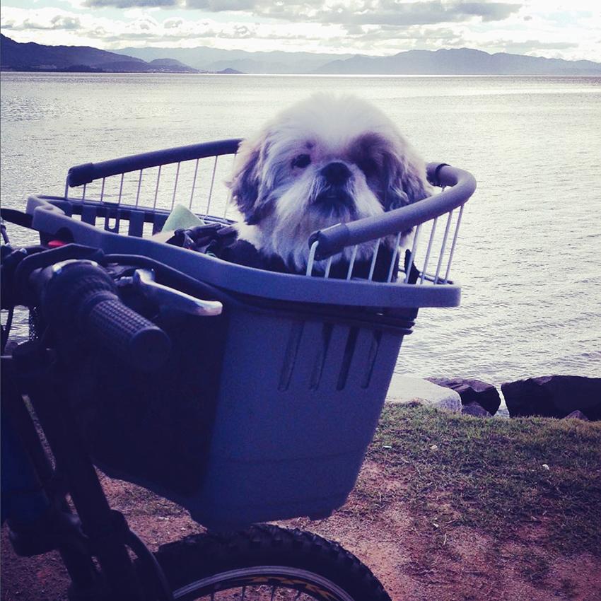 transportador de bicicleta para caes