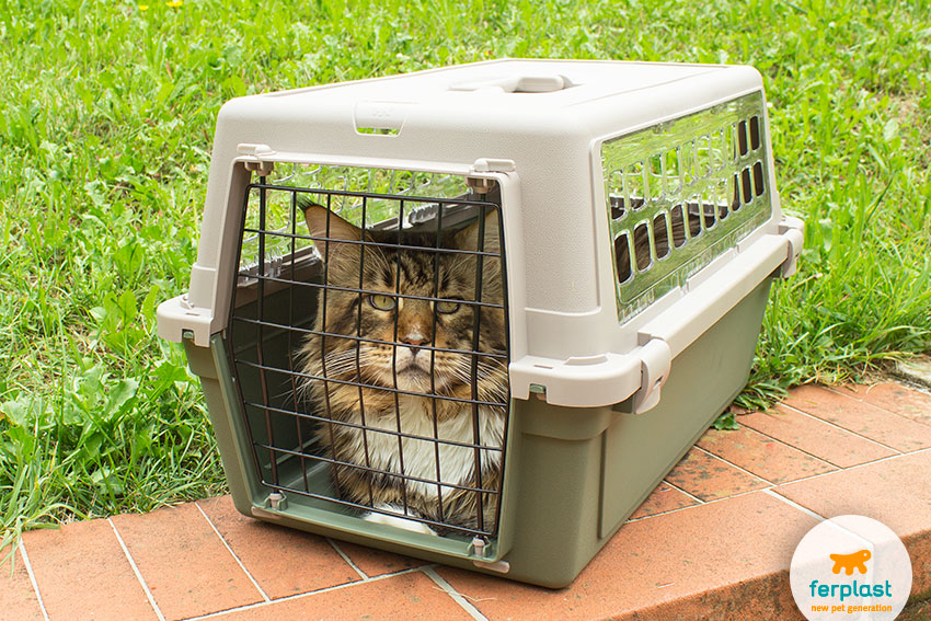 trasportino per gatti grandi maine coon