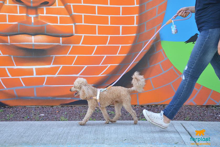 peitorais coloridos para cães