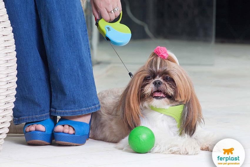 migliori cani da compagnia per chi vive in appartamento shih tzu