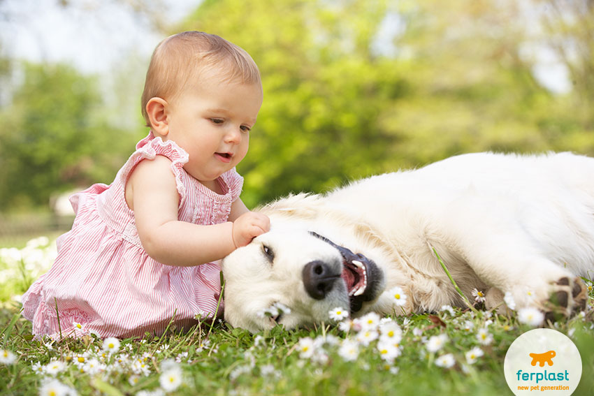 benifits babies small children and dogs living together