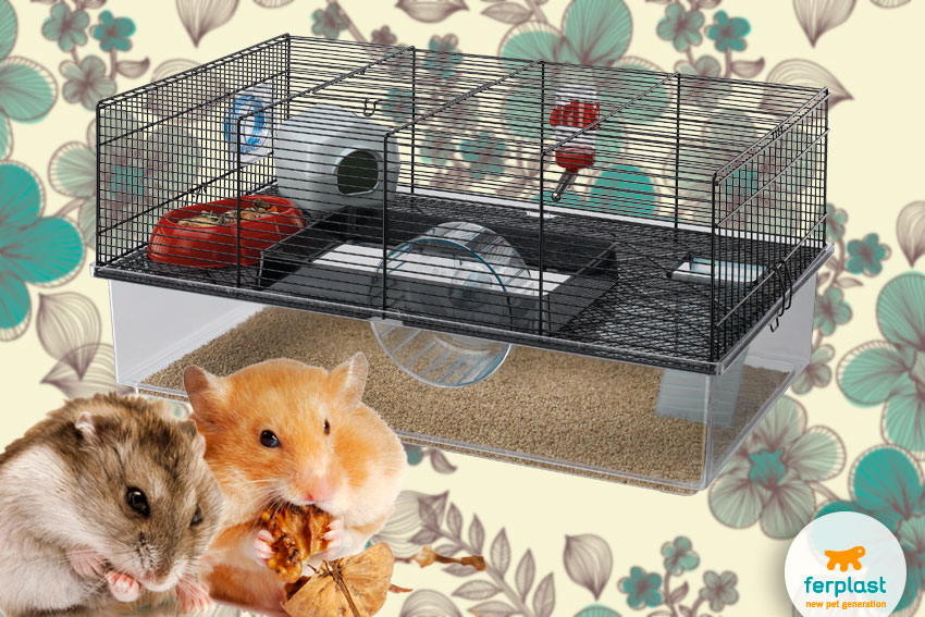 spacious cage for hamsters