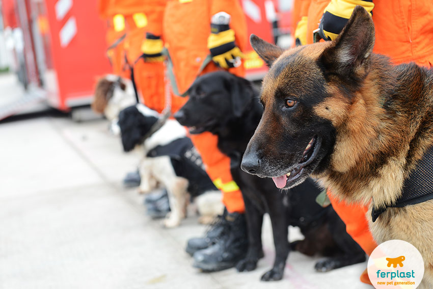 addestramento di cani da soccorso