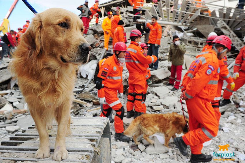 cani da soccorso terremoto
