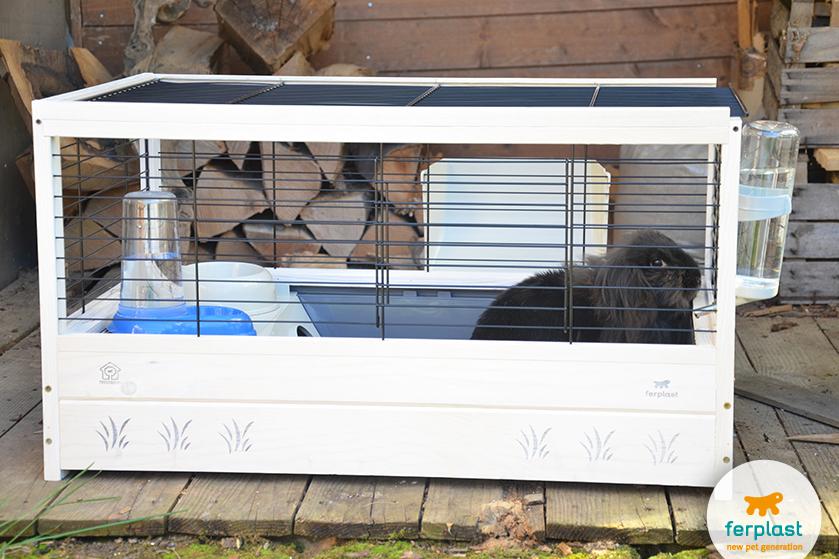 dicas sobre deixar o seu coelho em casa sozinho