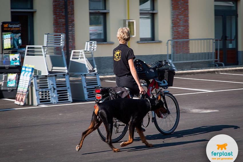 dobermann e trasportini per cani