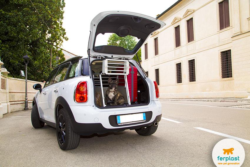 french bulldog in un trasportino per auto