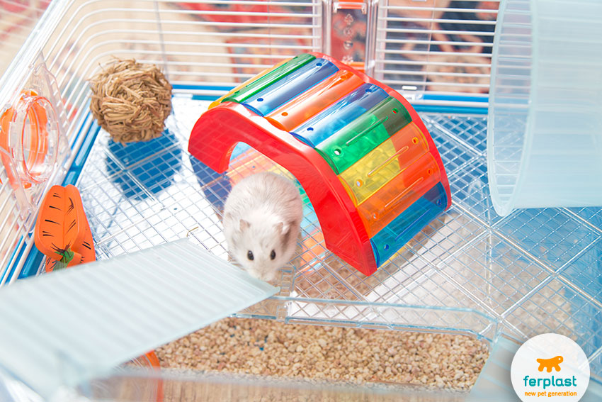 toys for hamsters tunnels and bridges