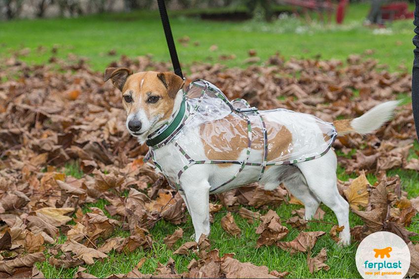 jack russell con un impermeabile per cani
