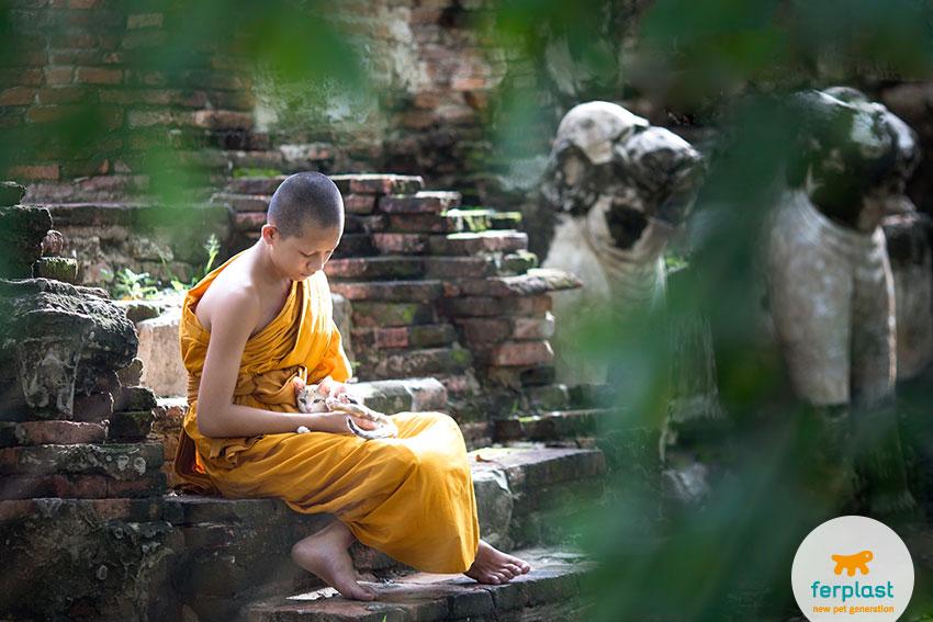 leggenda gatto sacro di birmania