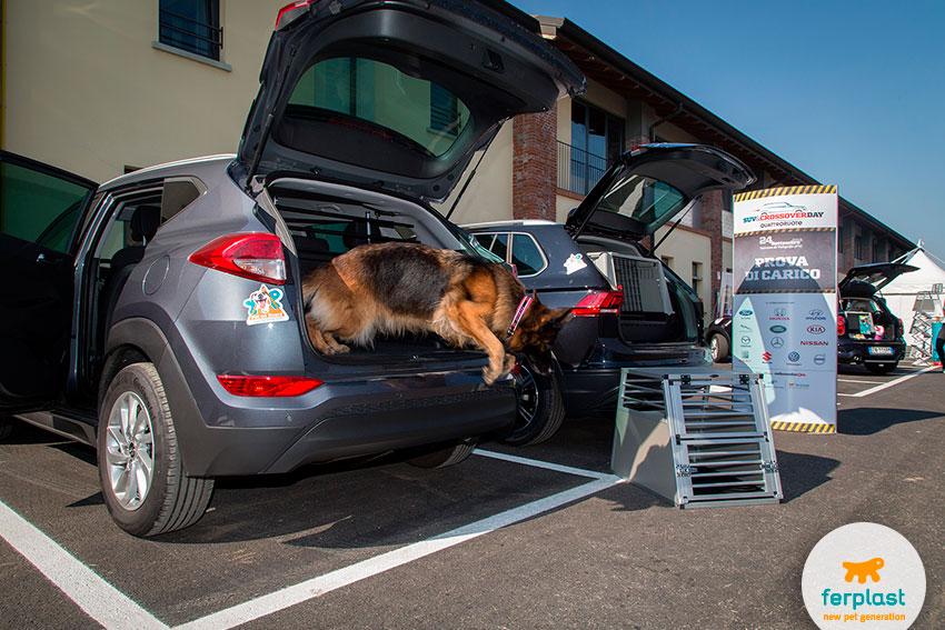 viaggiare in auto col cane