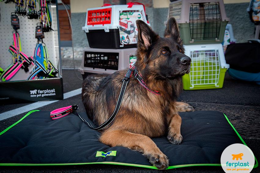 cane pastore tedesco femmina
