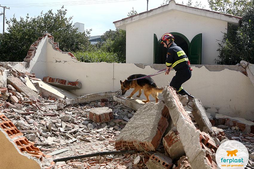 training di cani da soccorso in ricerca