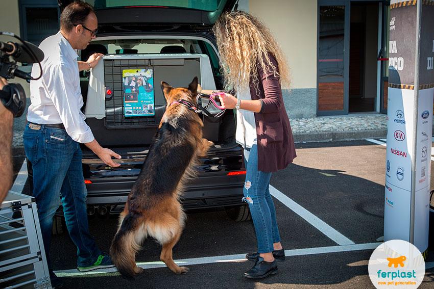 prove di carico in auto con cane pastore tedesco