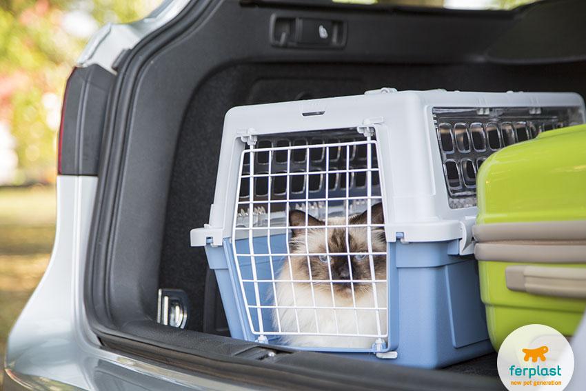 gatto birmano in un trasportino