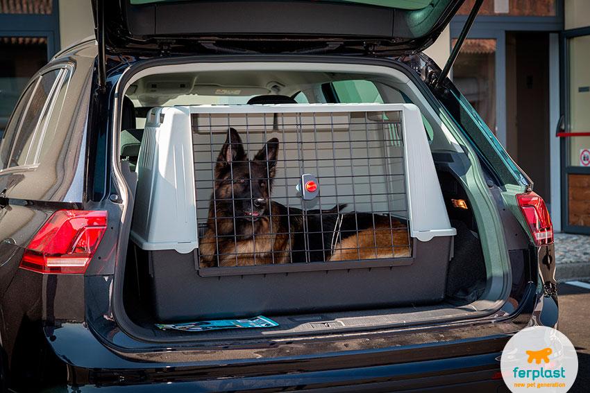 Trasporto del cane in auto informazioni e accessori for Amazon trasportini per cani