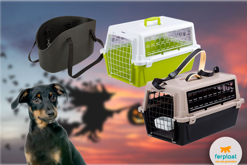 pet crates and carriers