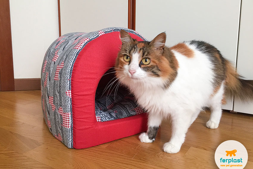 cute female cat with an igloo cat home