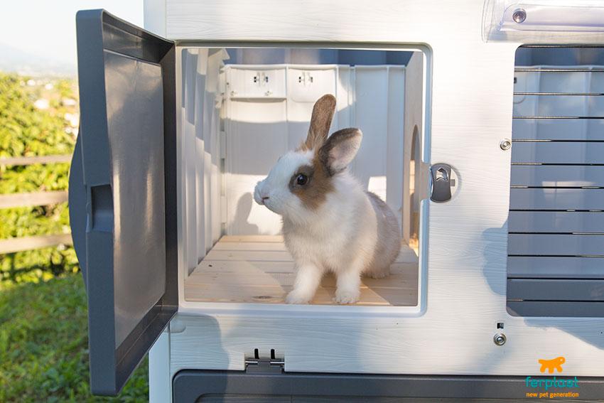 conigli in giardino rischi e precauzioni