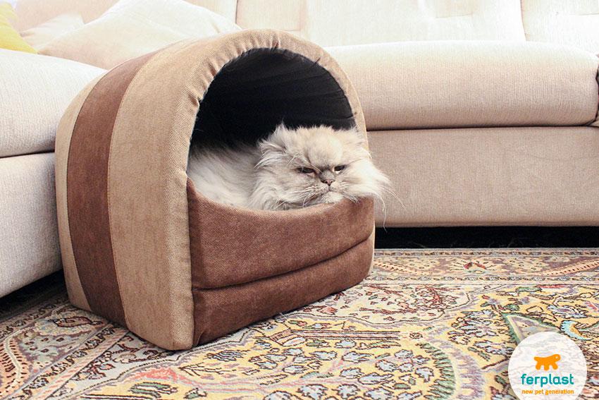 gatto persiano cincillà in una cuccia chiusa per gatti