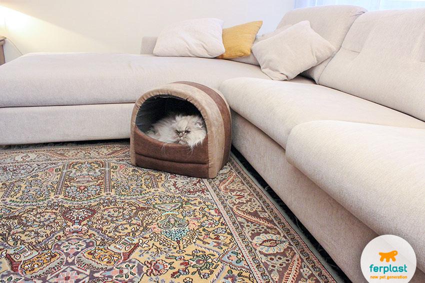 cuccia per gatti chiusa e lavabile