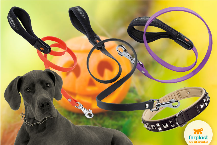 halloween dog leashes and collars