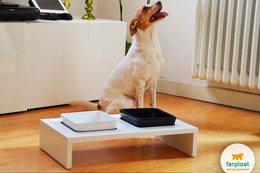 stylish Japanese design dog bowls