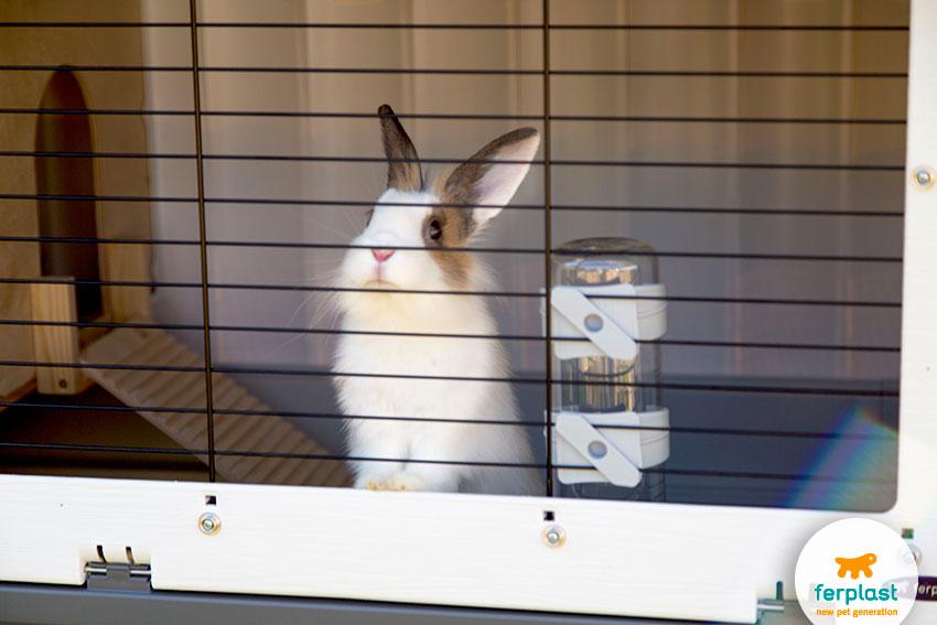 gabbia grande per conigli
