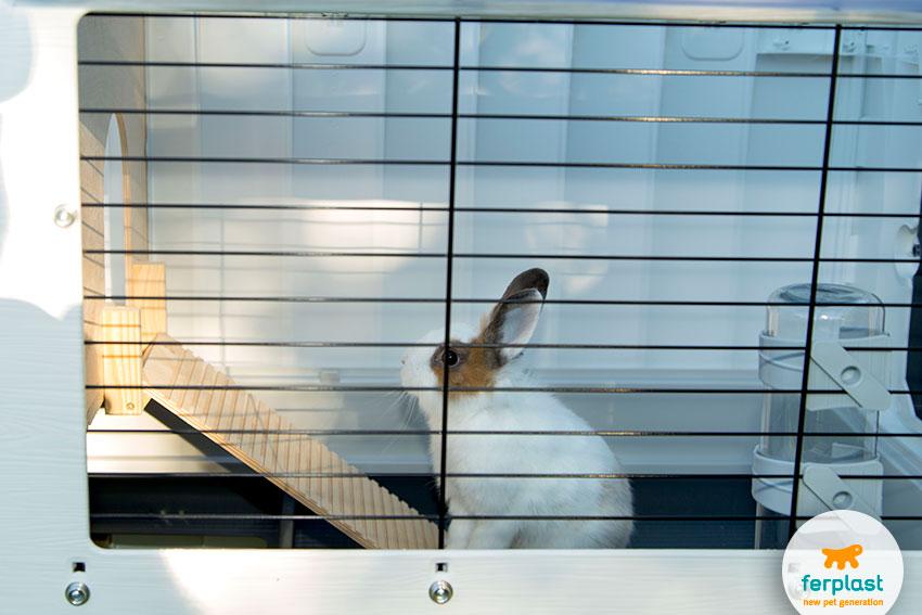 gabbia per conigli grande