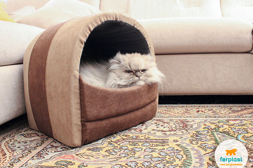 ferplast's cat home with a lazy persian chinchilla cat