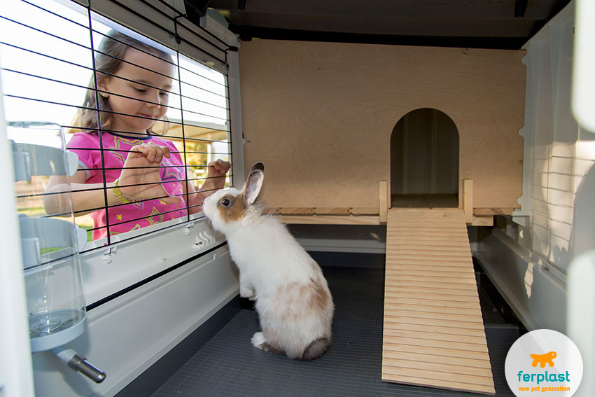 spacious two floor rabbit cage
