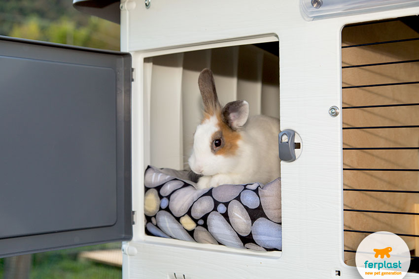 rabbit padded bed