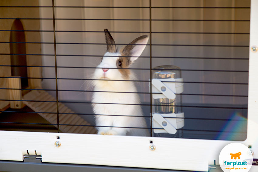 spacious outdoor rabbit cage