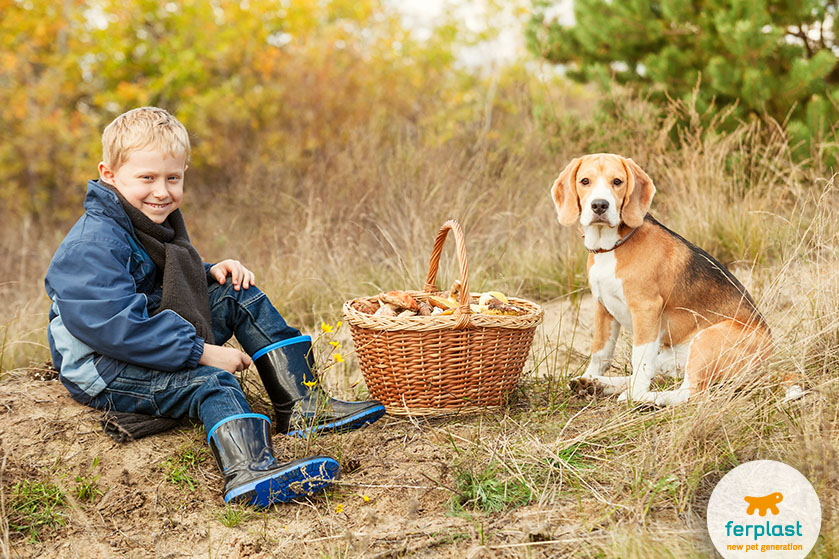 beagle_razza_bambini