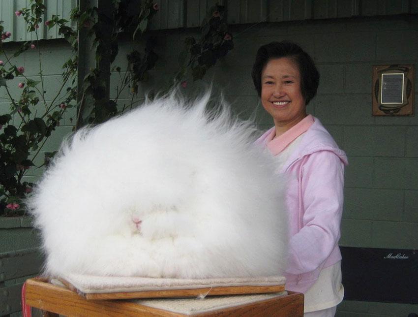 betty-chu-coniglio-pelliccia-lunga
