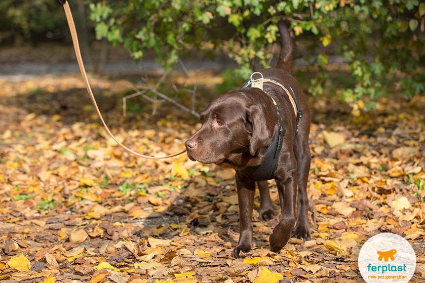 camminare_con_cane_autunno