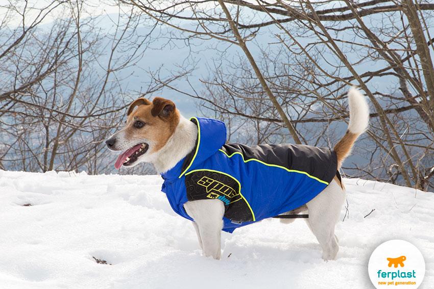proteggere le zampe del cane dalla neve