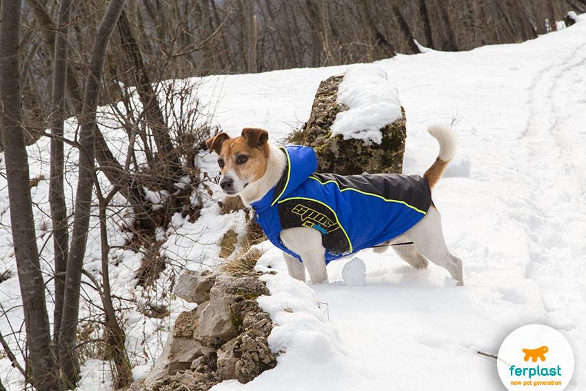 proteggere il cane dal freddo con un cappottino