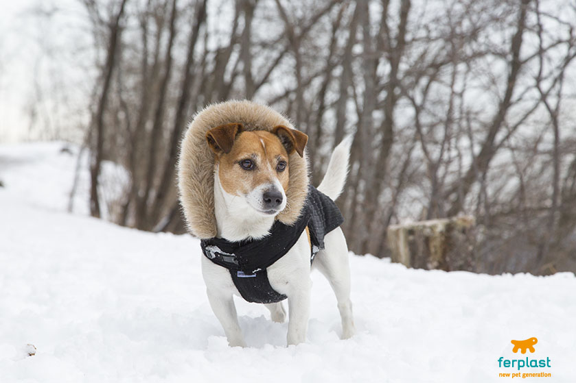 Why do dogs love the snow? - LOVE FERPLAST