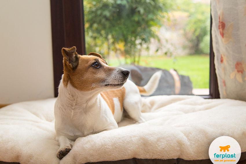 cuscini per cani con il pelo da un lato