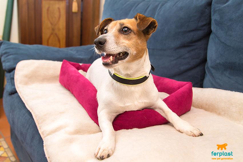 cuscini riscaldanti per cani che soffrono il freddo